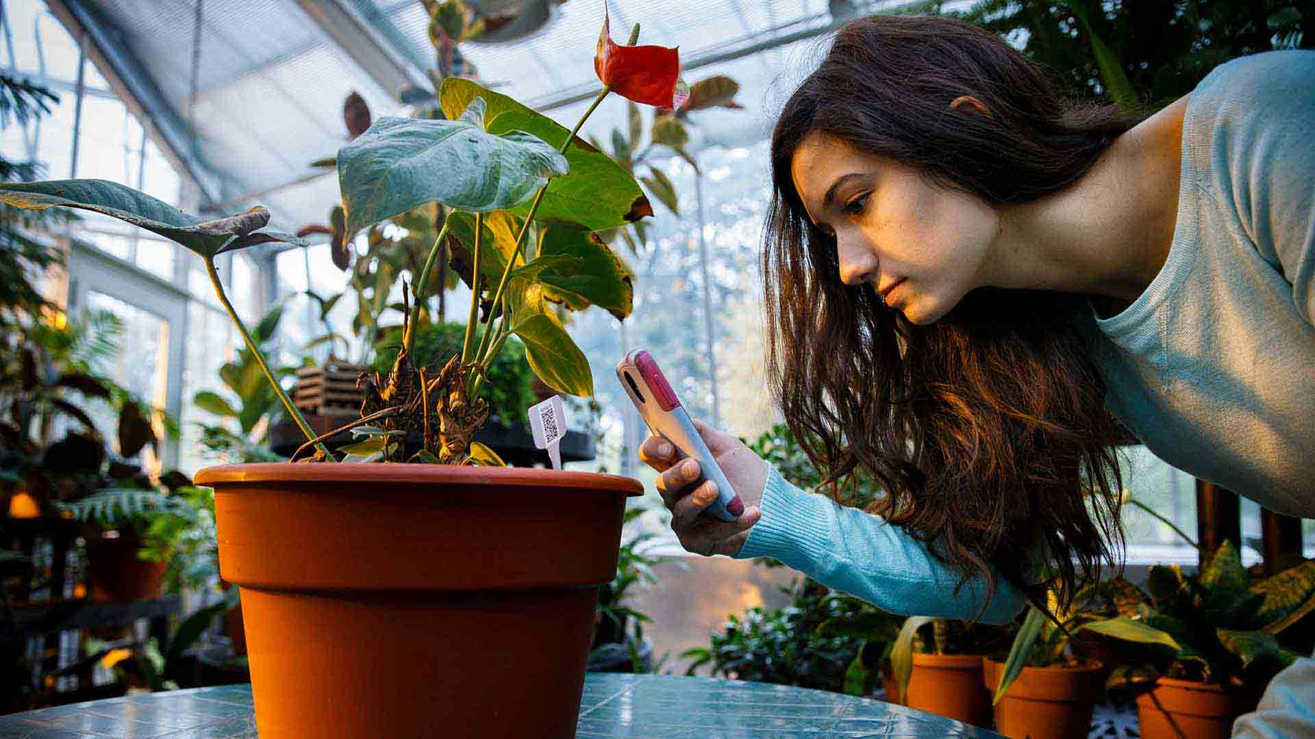 Biology major Kristen Bastug uses a smart phone to read a QR code (barcode) at a Plants, Food and Medicine class session in the John Roach Center for the Liberal Arts Greenhouse.